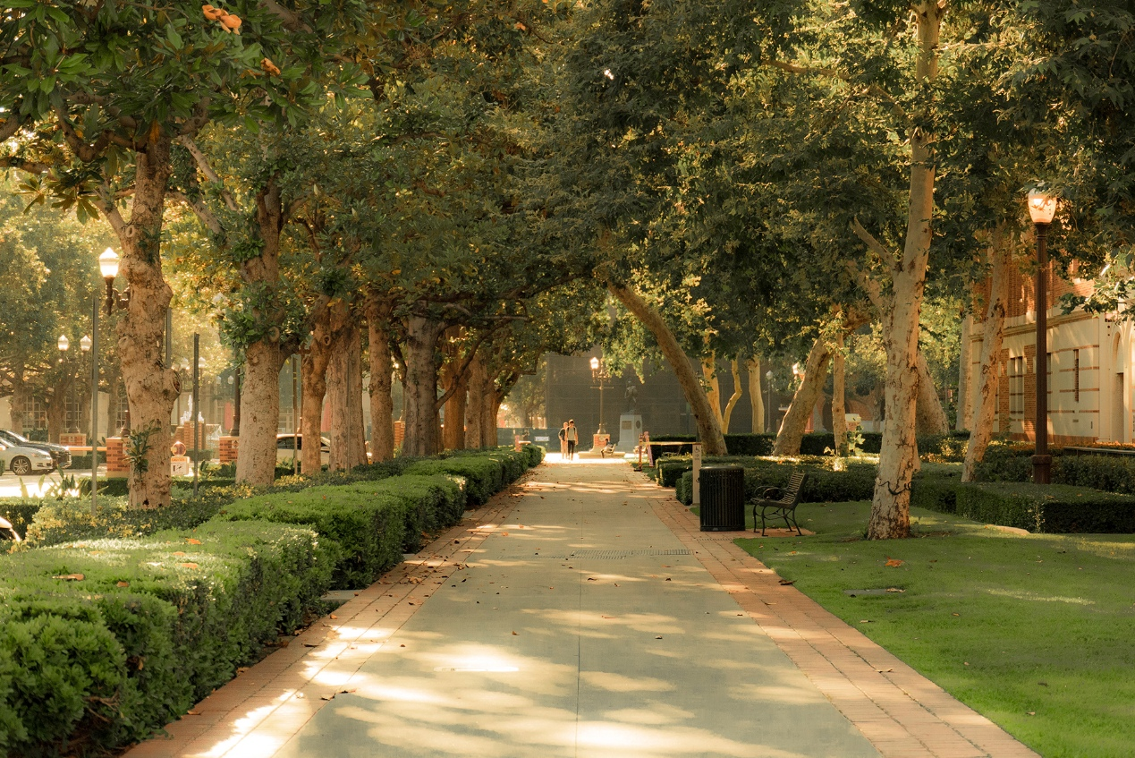 Tree-lined campus path